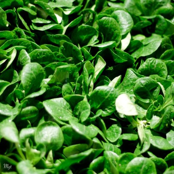 Salade  ©Mgt