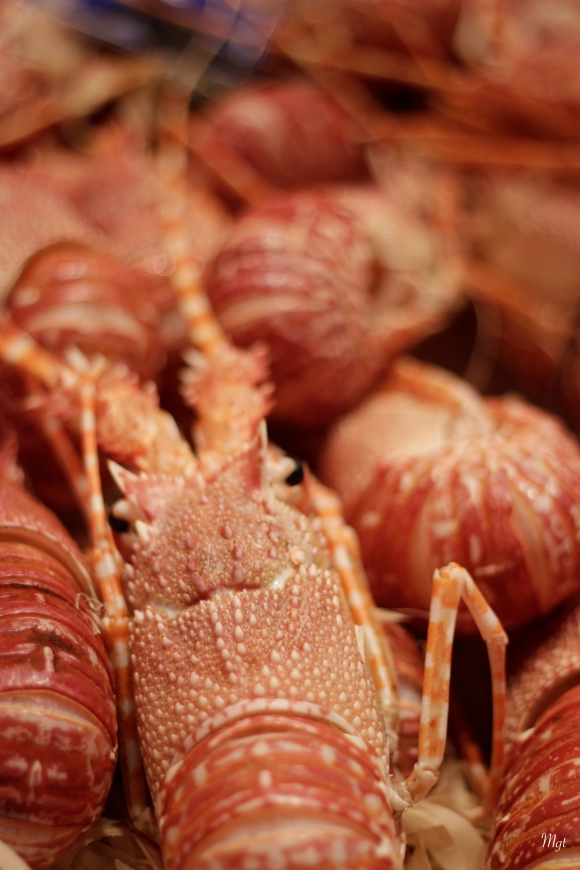 Crustacés ©Mgt